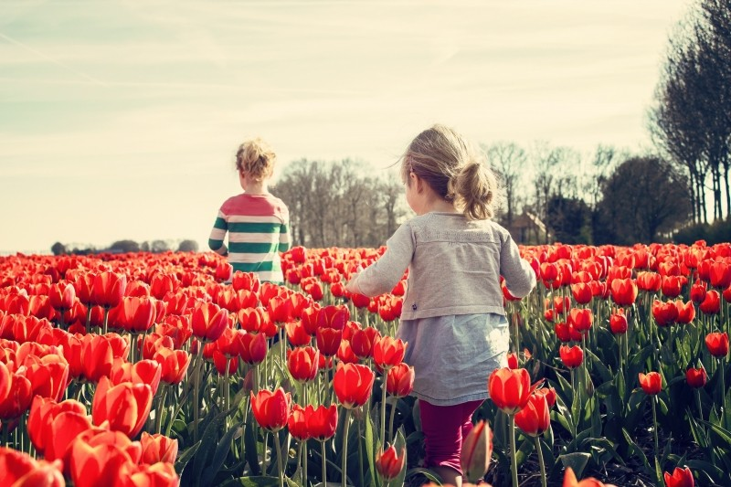 girls-children-tulips-netherlands-spring-nature